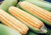 замороженная молочная кукуруза