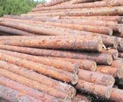 Продам рудстойку сосна. Диаметр 9-16 см.,  длина 4 метра.