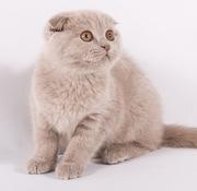 Плюшевые котята ждут свою семью!
