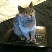 Продам котика!!!
